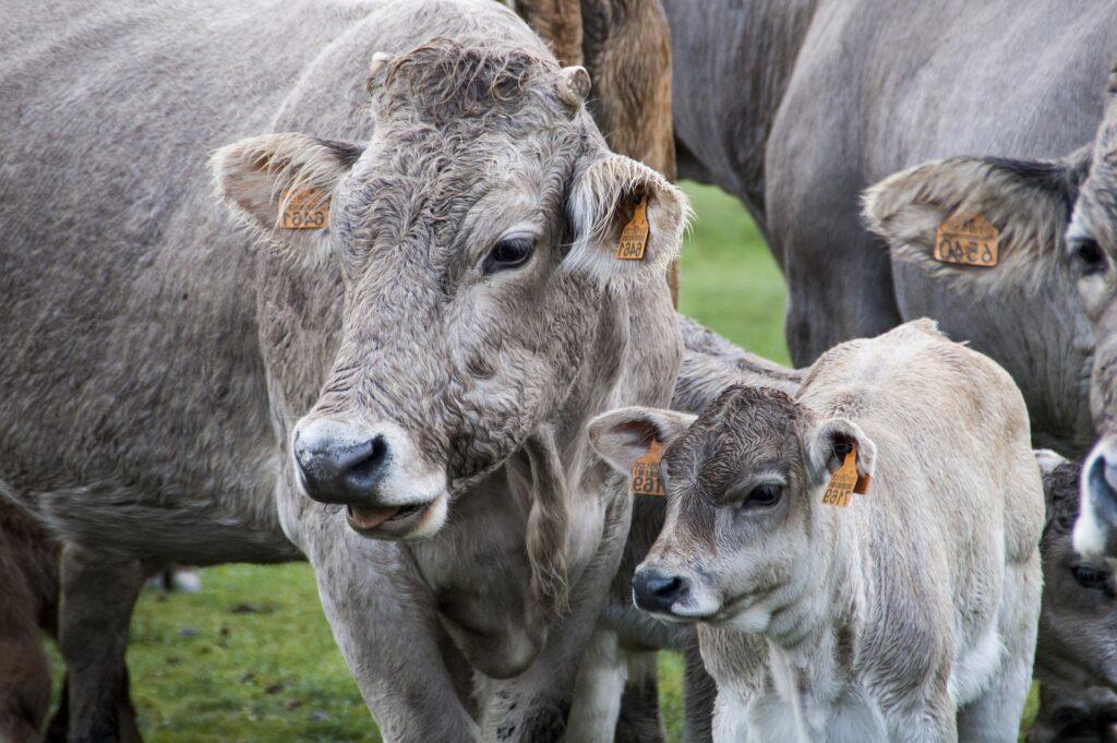 Il cibo e il cambiamento climatico: riduzione degli allevamenti intensivi